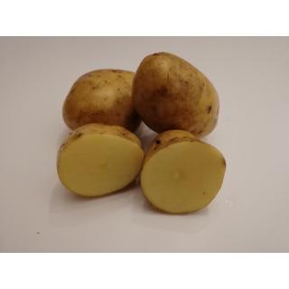 Kartoffeln Agria (mehligkochend)